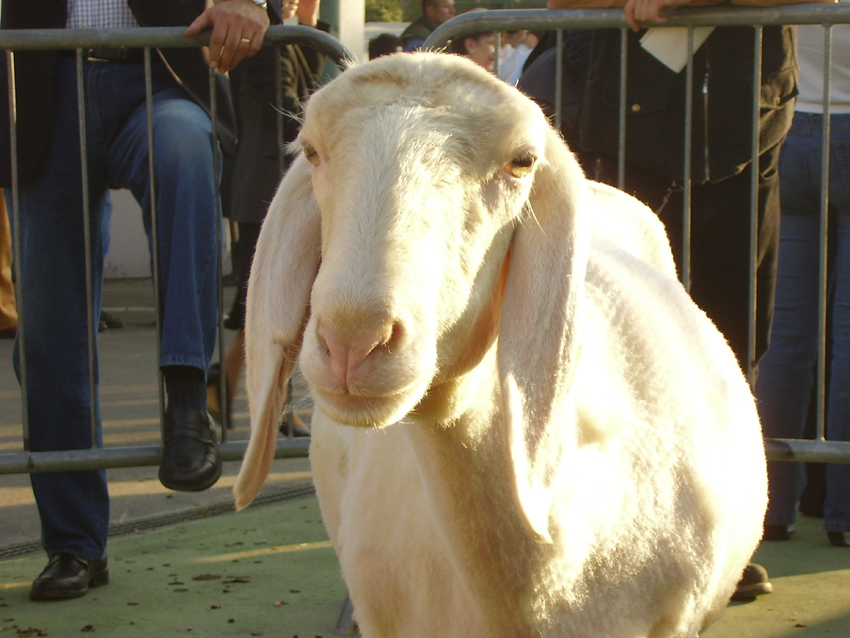Mostra della pastorizia